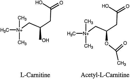 l-carnitine vs acetyl-l-carnitine